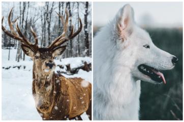 5-Garść inspiracji i pomysłów na zdjęcia zimowe